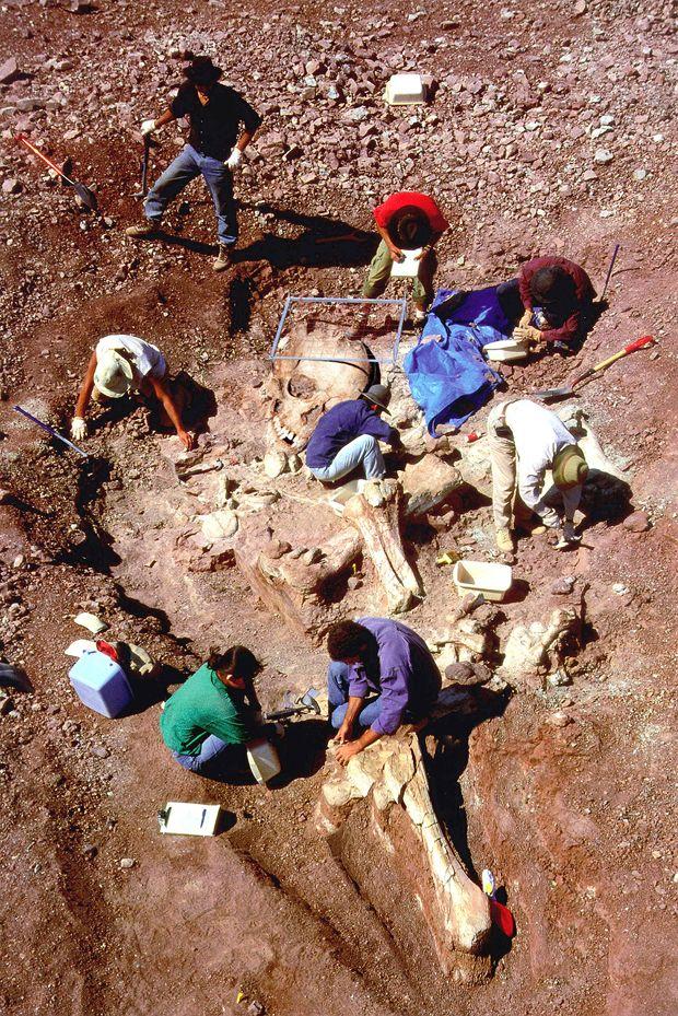 дизайнеры разрабатывают факты о великанах найденных археологами фарфоровые, стеклянные кружки