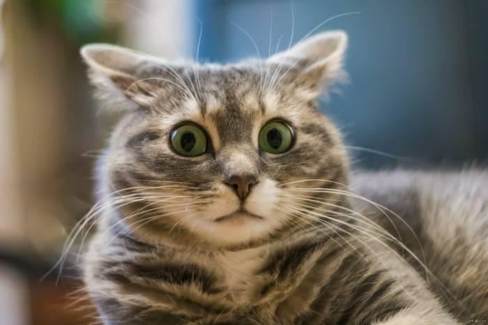 Что видит хозяин что видит кот