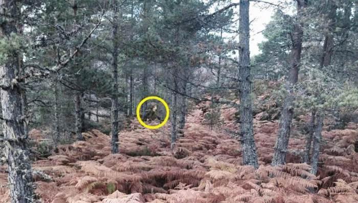 Сняли в лесу